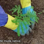 plantio_muda_nativa